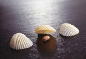 shell`